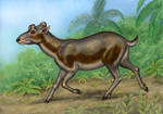 Barbouromeryx trigonocorneus