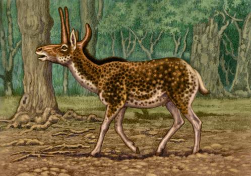 Procranioceras skinneri