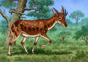 Hoplitomeryx matthei