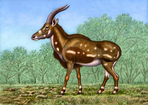 Miotragocerus monacensis