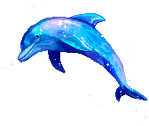 Dolphin by mks8