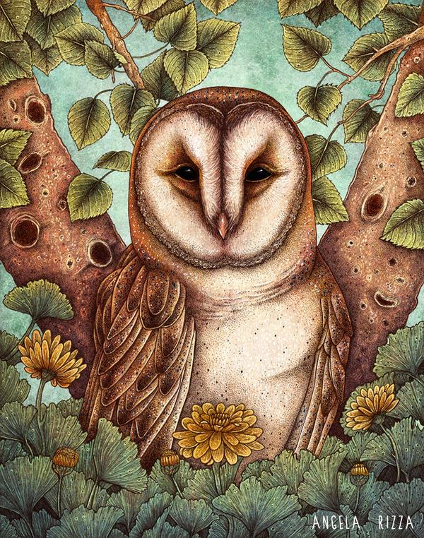 Spring Barn Owl by AngelaRizza