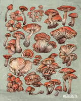 A Series of Mushrooms