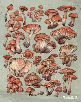 A Series of Mushrooms