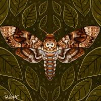 Deaths-Head Moth