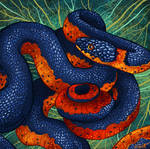Ringneck Snake