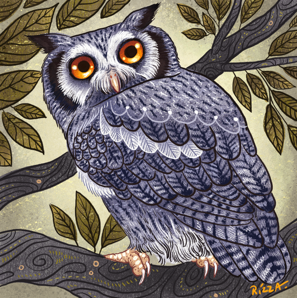White Faced Owl by AngelaRizza