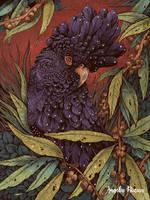 Black Cockatoo by AngelaRizza