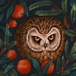 Rockefeller Owl