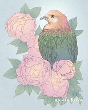 Peony Pigeon