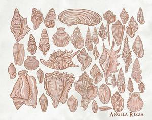Seashell Flash Sheet