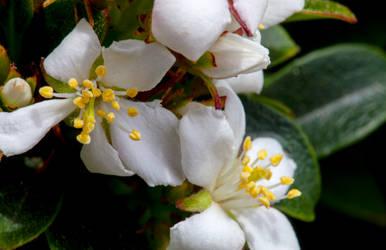 Petals and Pollen