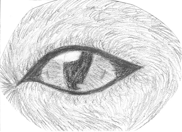 wolf eye in charcoal by IceStar98 on DeviantArt