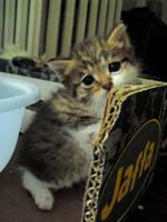 Little Kitten by Th3-C0unt3ss