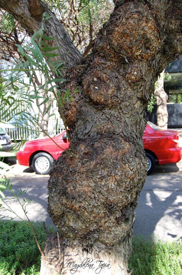 Pregnant Tree 67