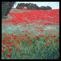 poppy field by szklanytygrys