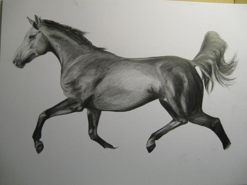 Horse by AnoukvanderMeer