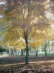 The Autumn Gold 13