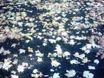 The Autumn Gold 14