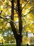 The Autumn Gold 16