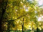 The Autumn Gold 18