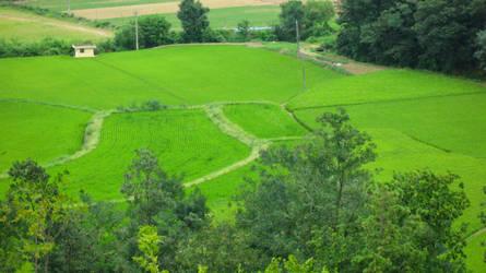 Rice Field Near the Dorms by jamesleeisbuff