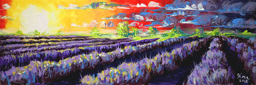 Lavender field - OUT OF STOCK