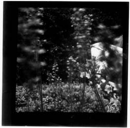 Lochkamera Blumen 01