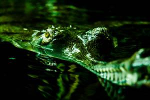 reptile by InV4d3r