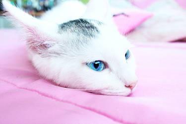 Sapphire Eyes by Xelhestiel