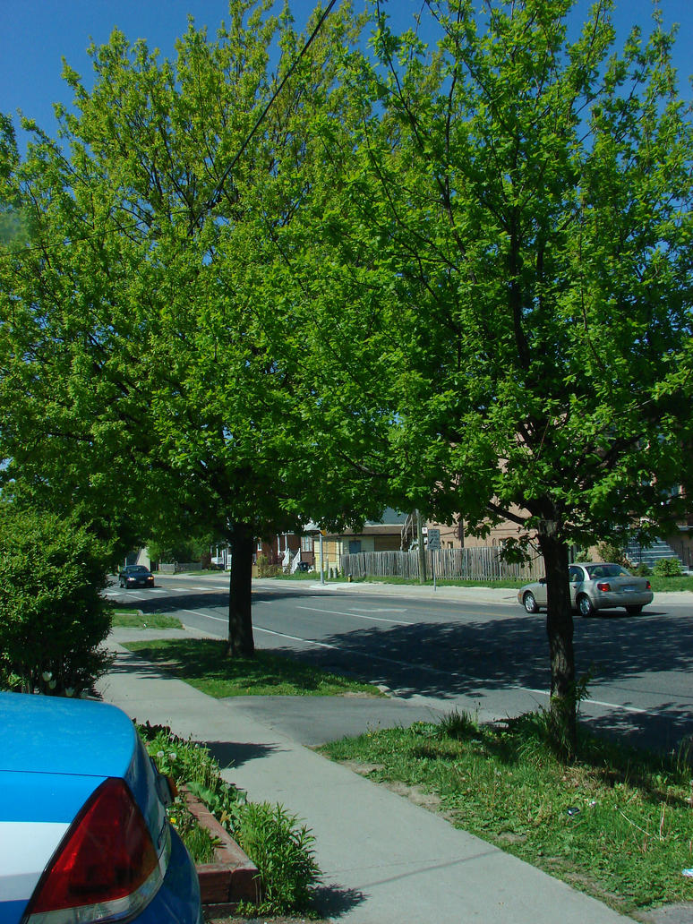 Superior Front Yard Trees By Nayab2515 ...