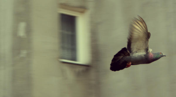fly, fly away by sallmone
