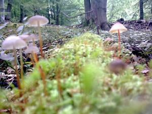 Mushroom Street