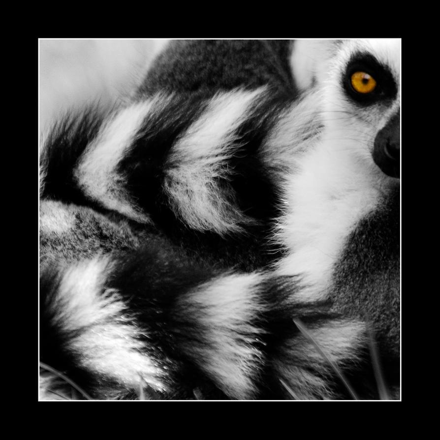 Ring-tailed Lemur by TanteSjaan