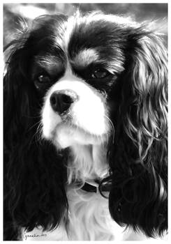 Portrait of a Cavalier