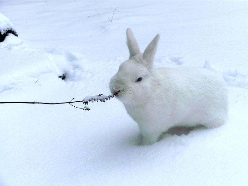 how to help an injured wild rabbit