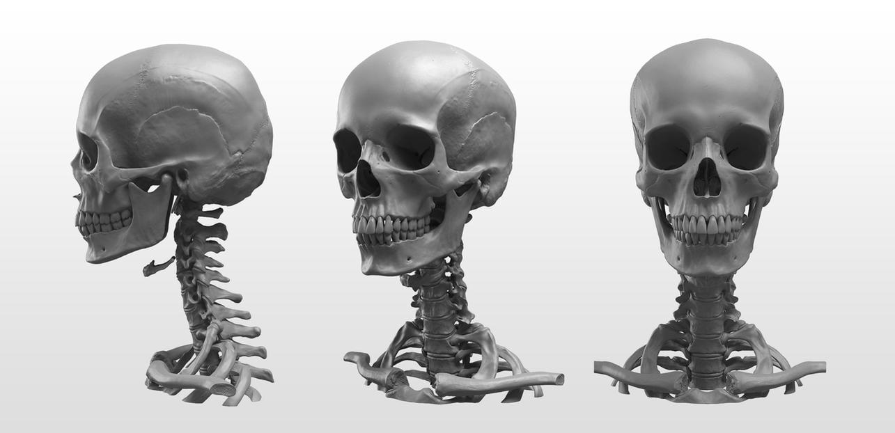 NMA Anatomy Head by NewMastersAcademy on DeviantArt