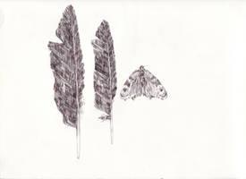 lavender. by homseni