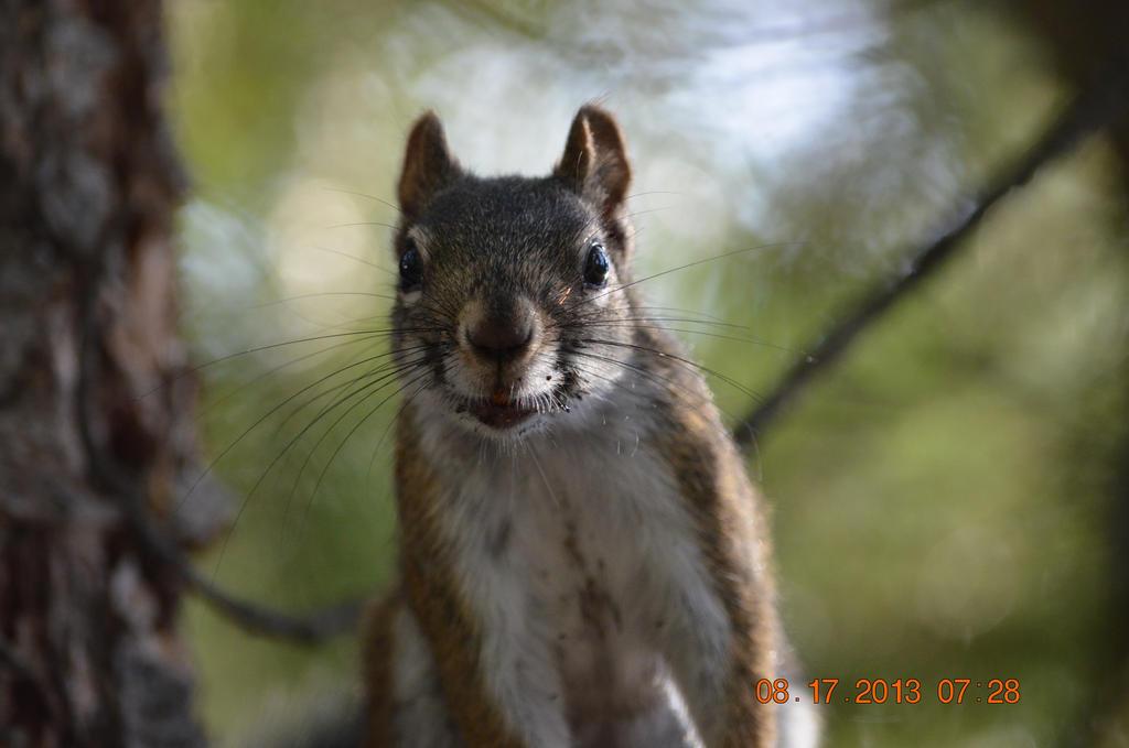 Squirrel (5) by FantasyDreamerStar