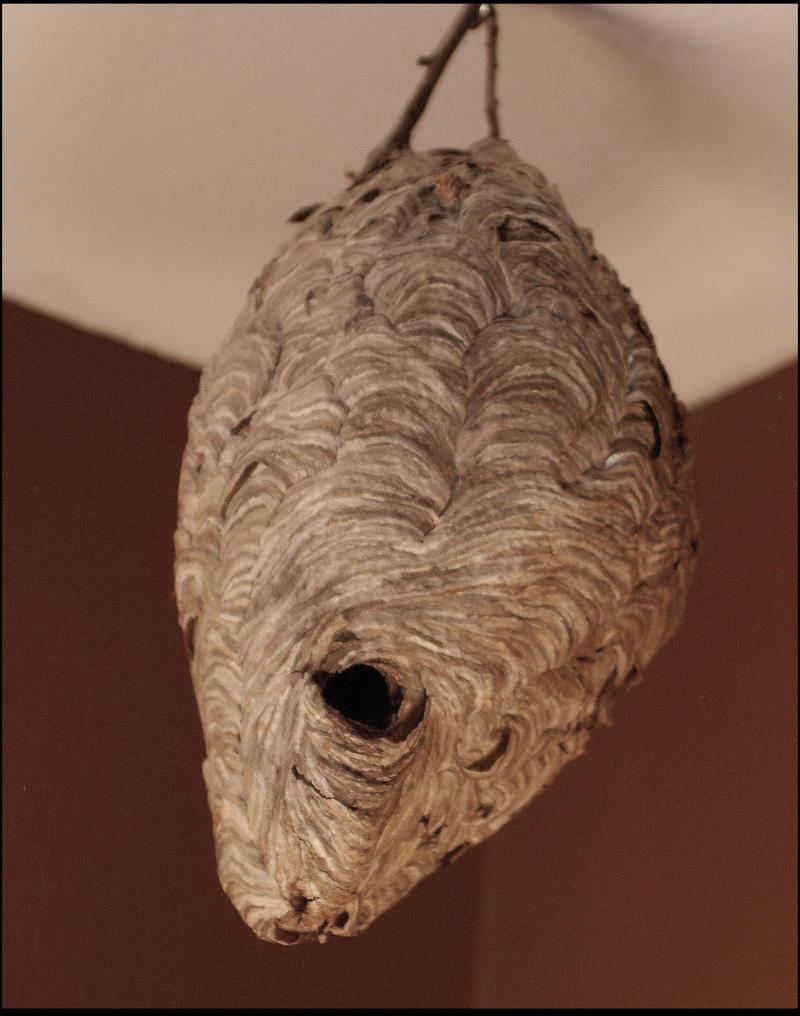 paper wasp nest by RandyHand on DeviantArt