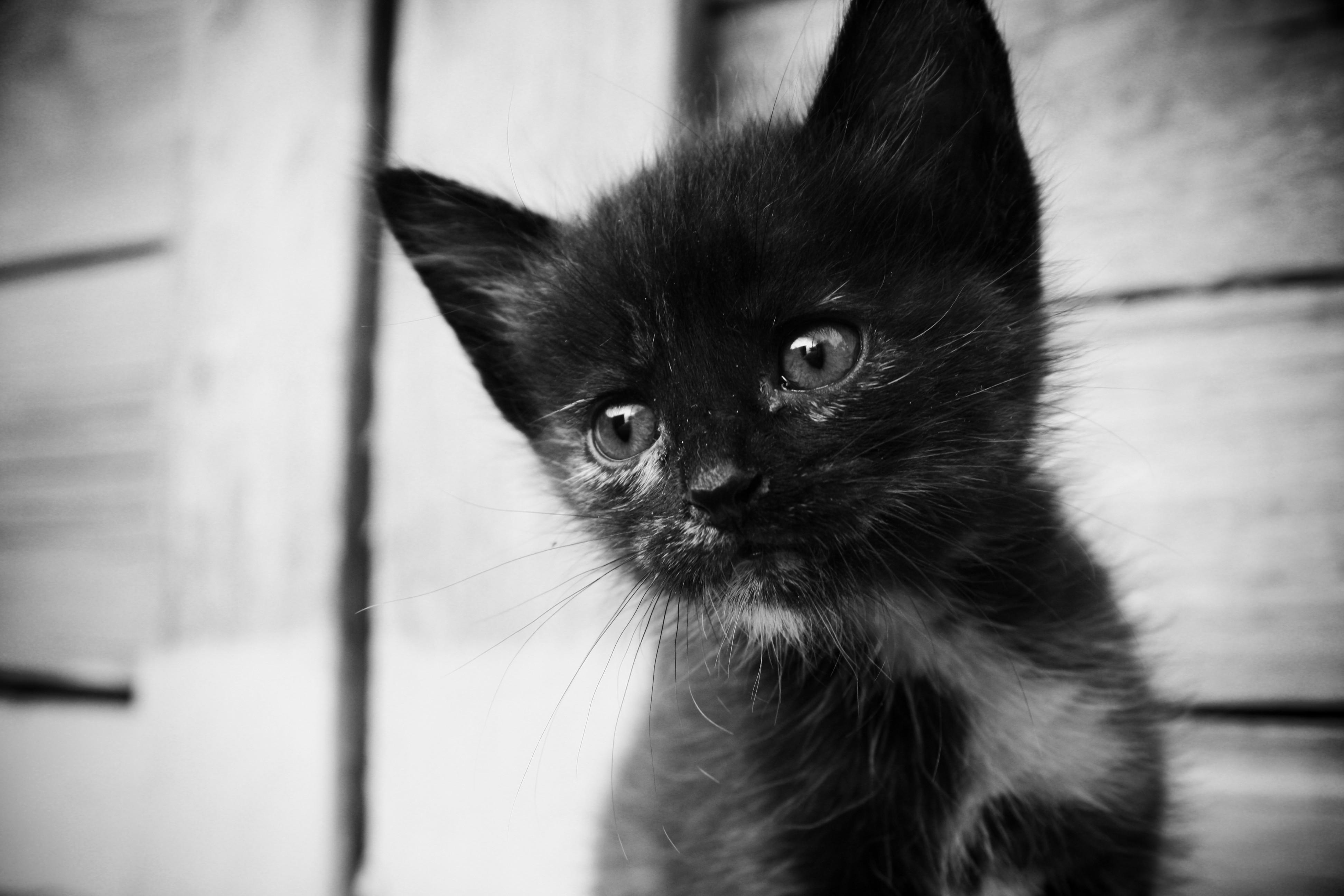 Lonely Cat Black