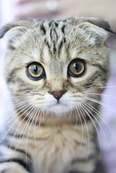 Makar-cat