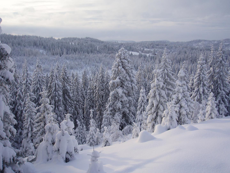 Snowy Landscape 01 by NenjasStock