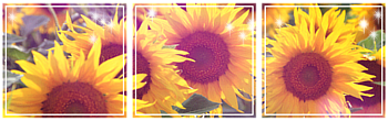 [F2U] Divider Sunflowers