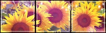 [F2U] Divider Sunflowers by Ostara000
