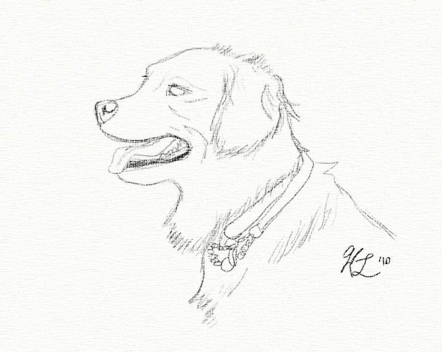 Line Drawing Golden Retriever : Golden retriever sketch by t hsilentone on deviantart