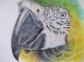 Parrot 4 by Galatea-LE