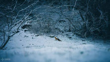 Snowy Footprints by Gomeisa-Studio