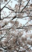 Sweet - Nagoya, Japan by xXScarletButterflyXx