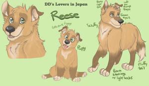 DDK Dogs - Reese